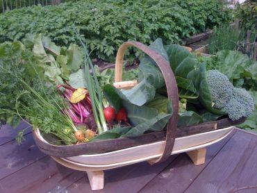 Fresh veg from the Kitchen Garden