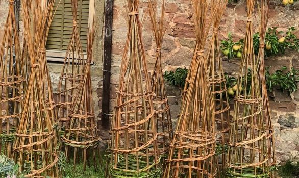 Making Willow Plant Supports | 18 May 2019