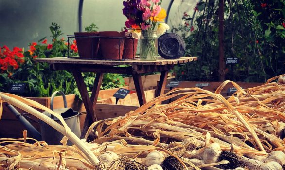 A Beginner's Guide to Organic Smallholding | 11 July 2020 | Bookings Open
