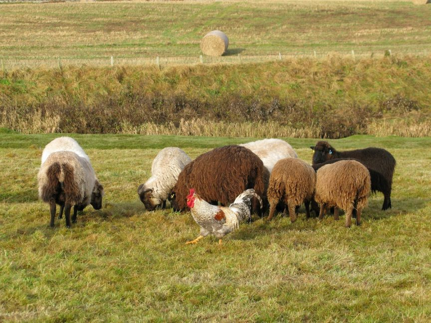 Tupping Time
