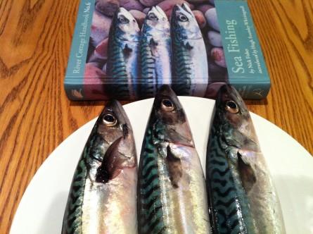 Crail caught mackerel