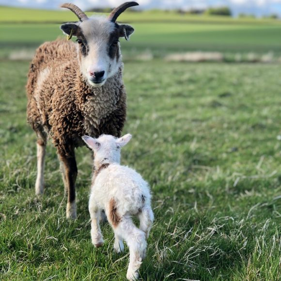 A Beginner's Guide to Organic Smallholding    20 August 2022   Bookings open