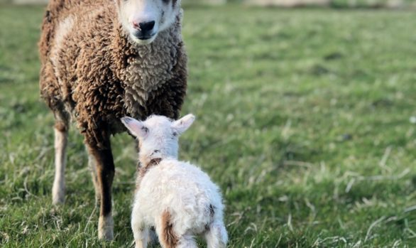 A Beginner's Guide to Organic Smallholding |  20 August 2022 | Bookings open