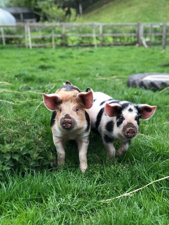 A Beginner's Guide to Organic Smallholding   4 September 2021   Bookings Open
