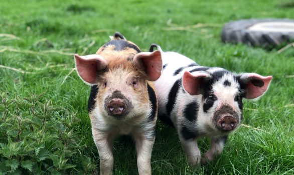 A Beginner's Guide to Organic Smallholding | 4 September 2021 | Bookings Open