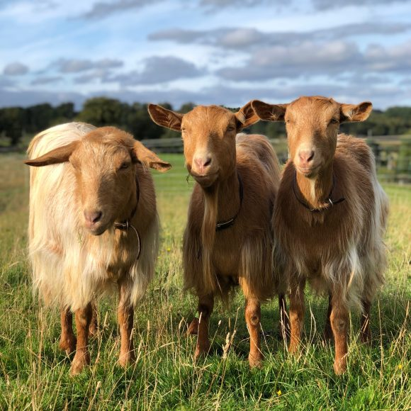 A Beginner's Guide to Organic Smallholding    7 August 2021   This course is fully booked