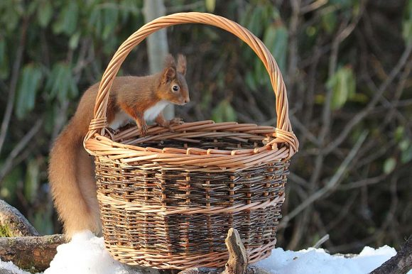 Winter Basketry for Beginners and Improvers   4 & 5 December 2021   This course is now full