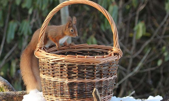 Winter Basketry for Beginners and Improvers | 4 & 5 December 2021 |