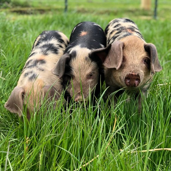A Beginner's Guide to Organic* Smallholding   17 September 2022   Bookings Open