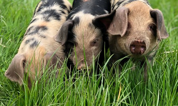 A Beginner's Guide to Organic* Smallholding | 17 September 2022 | Bookings Open