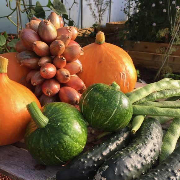 ADDITIONAL DATE   A Beginner's Guide to Organic Smallholding   9 October 2021   Bookings Open