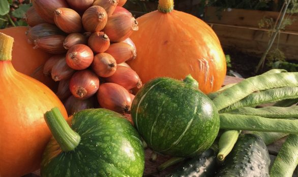 ADDITIONAL DATE | A Beginner's Guide to Organic Smallholding | 9 October 2021 | Bookings Open