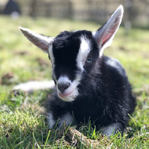 A Beginner's Guide to Organic Smallholding   14 May 2022   Bookings Open